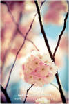melody of spring by Finvara