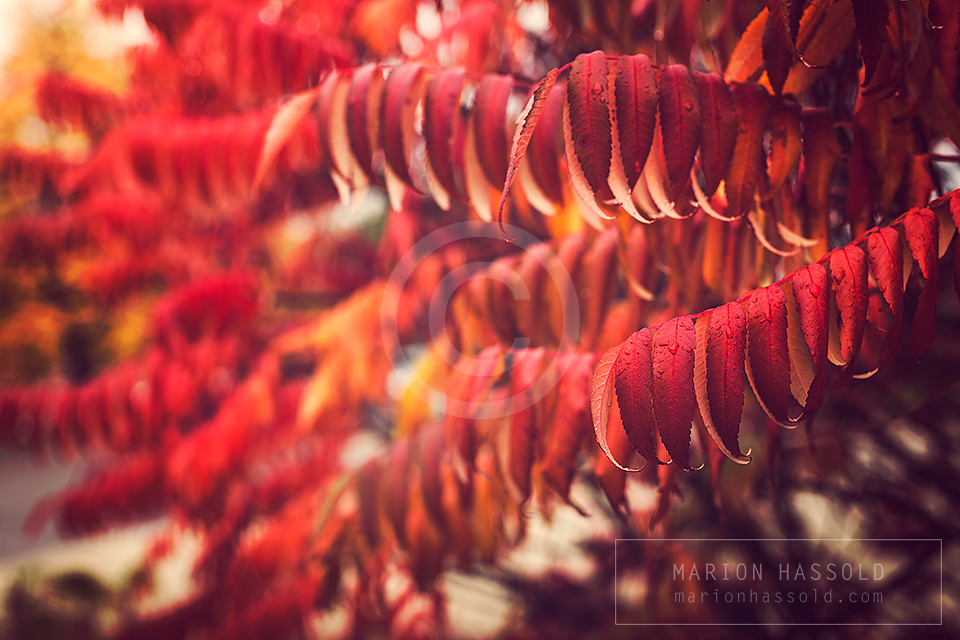 First signs of autumn by Finvara