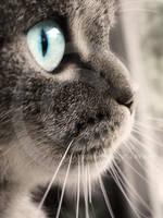 my cat by Finvara
