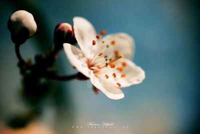 april 2 by Finvara