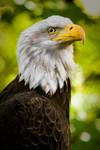 A portrait of patriotism by KdawgSr