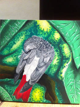 Poppy The African Grey canvas