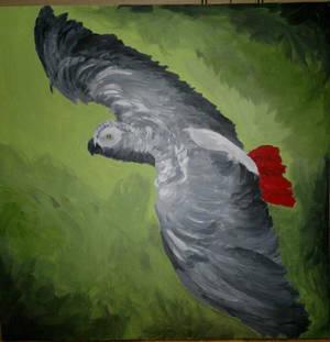 Poppy The African Grey 2