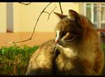 + Wildlife II