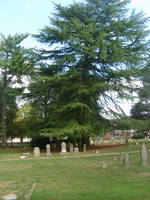 Old Cemetery 40 by fairchild-stock