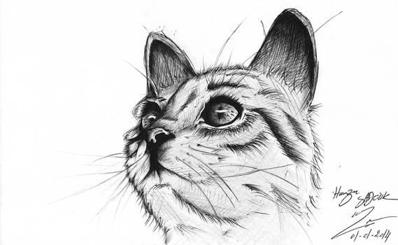 ballpoint cat