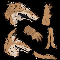 Caligo sketches