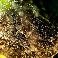 Web drops by ideareattiva