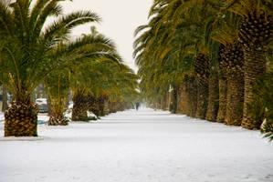 La neve e le palme by ideareattiva
