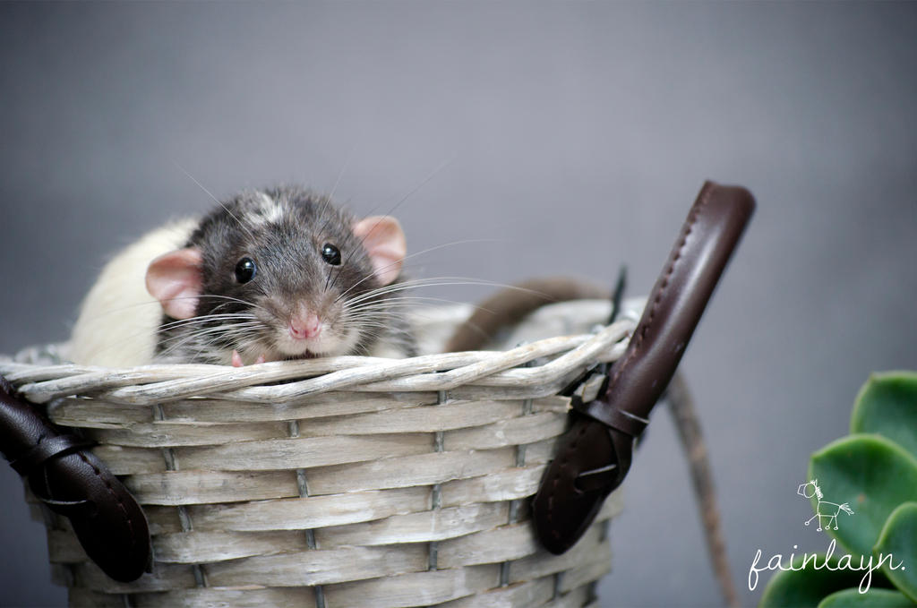 It's an Andy in a basket by clara-di