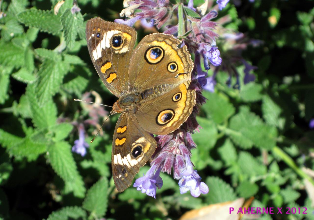 Moth in the garden by Lasercrew420
