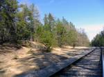 Dune Area Along Railroad Tracks