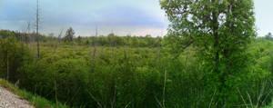 Treetops Valley Panorama