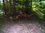 Skull-like Branch In Forest