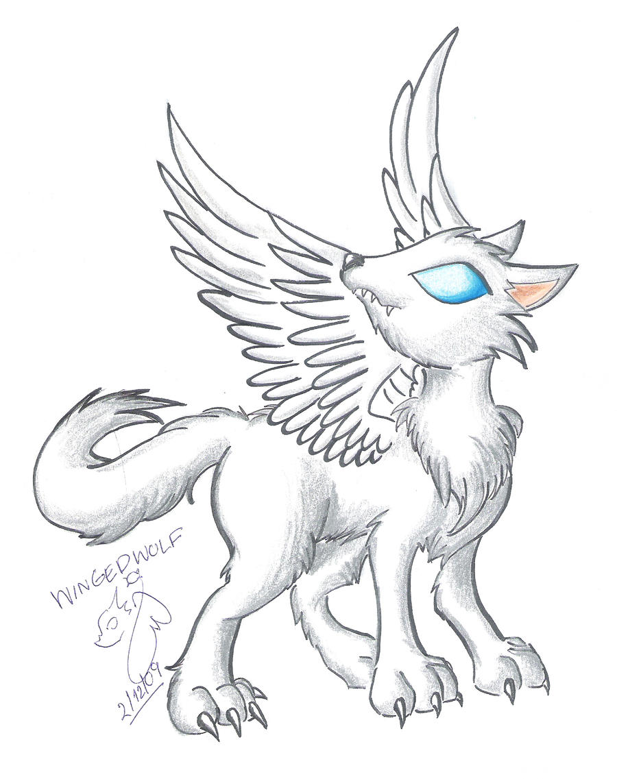Howtodraw Winged Wolf By Wingeddragoness