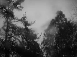 Woods of Sorrow