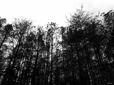 Pale Sky, Black Horizon