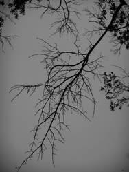 Thus the Shadows Trace my Veins by Atrasylvania