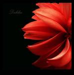 .:.Dahlia.:. by Ailedda