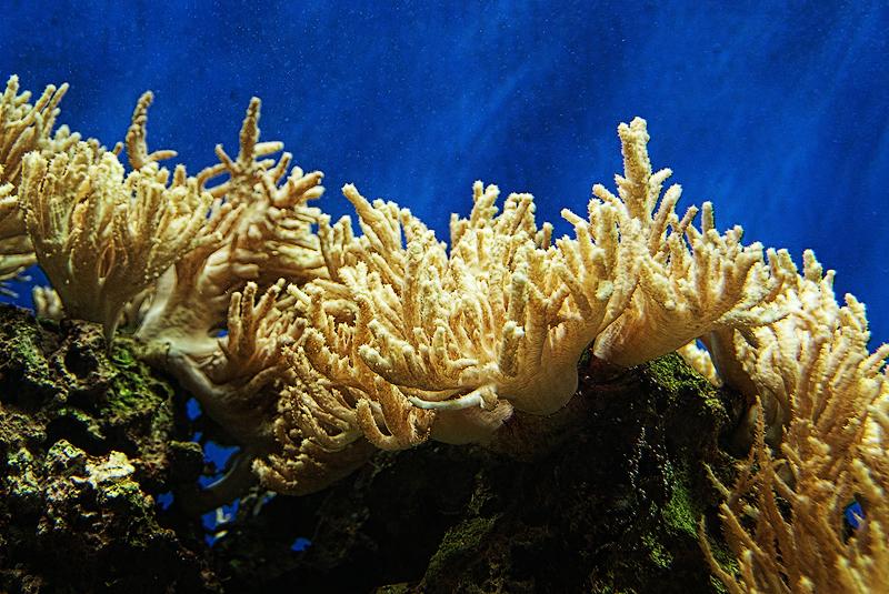 .:.Corals.:. by Ailedda