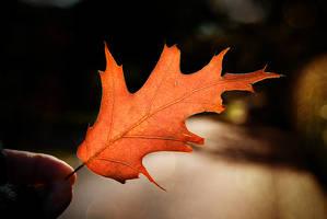 .:.First Autumn Leaf.:. by Ailedda