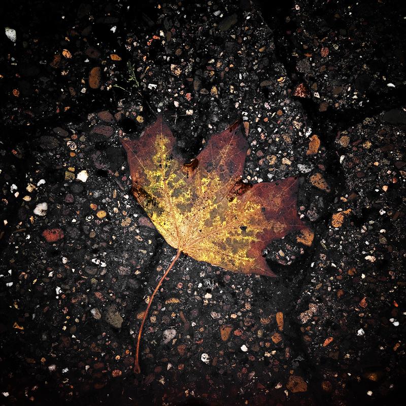 .:.Fallen.:. by Ailedda