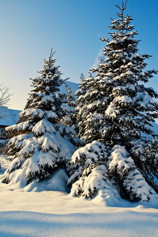 .:.Magical Winter.:. by Ailedda