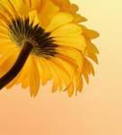 :Beautiful Yellow:
