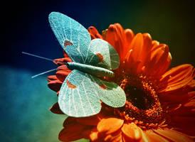 :Blue Butterfly: by Ailedda