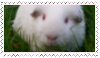 Edward the Guinea Pig Stamp by jenniferlaura