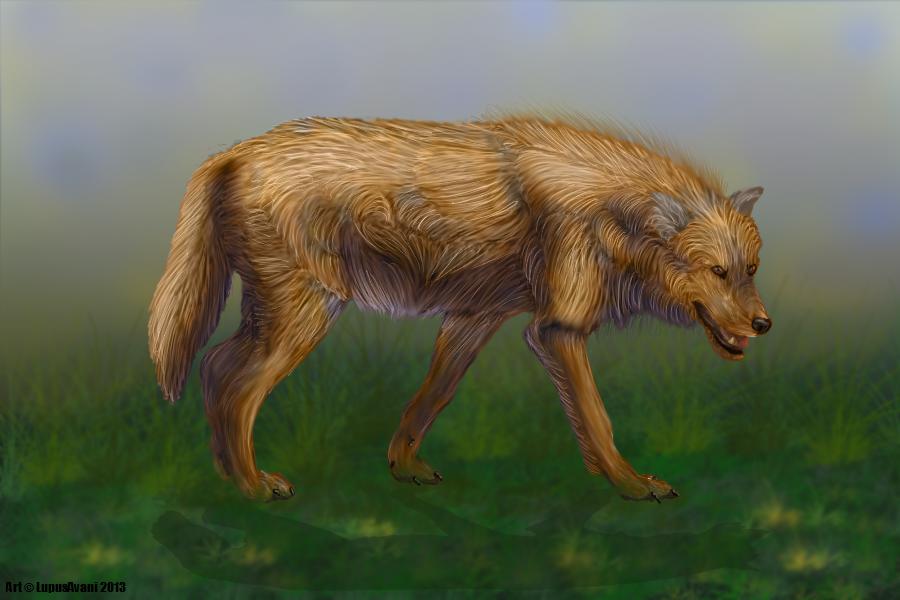 Wolf by LupusAvani