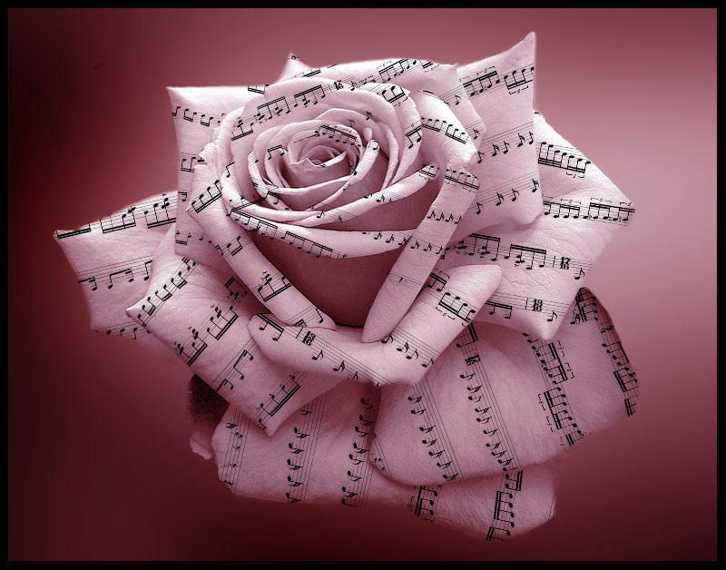 Music Rose by DonatoCamino