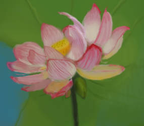 Lotus Flower by Cosmos-Centric