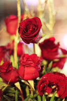 Red Roses. by starryskiiies