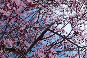 La Primavera by EsterAragon