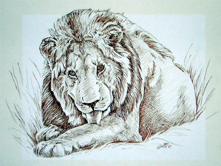Lion drawing by S. Fairbanks by sfairbanks