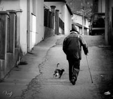 Cat Walk by vodj