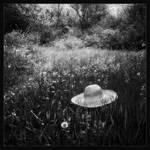 Splendor in the Grass by vodj