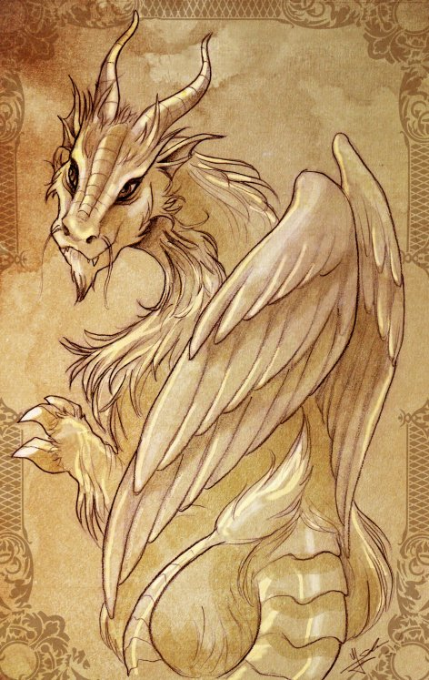 Feathered dragon by Evolvana