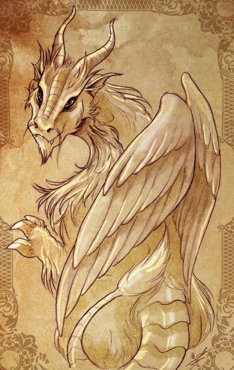 Feathered dragon by Evolvana