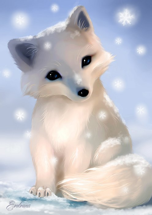 Chibi Arctic Fox By Evolvana