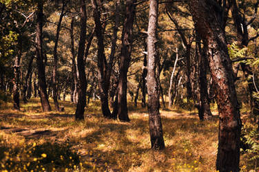 Nature's Way by blackkarcane