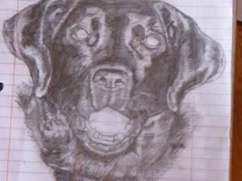 lab drawing by CierraFrye