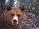 Grizzly Bear by CierraFrye