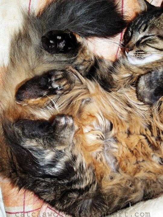 kitty by catclawcut