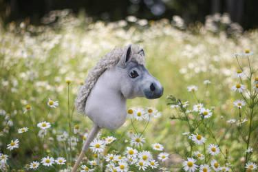 Hobbyhorse Foal