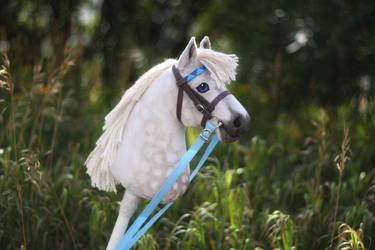 Dappled Grey Pony