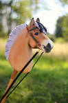 Norwegian Fjord Hobbyhorse by Eponi-hobbyhorses