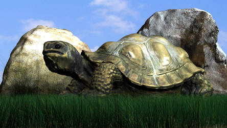 Turtle 3D model by 3DSud