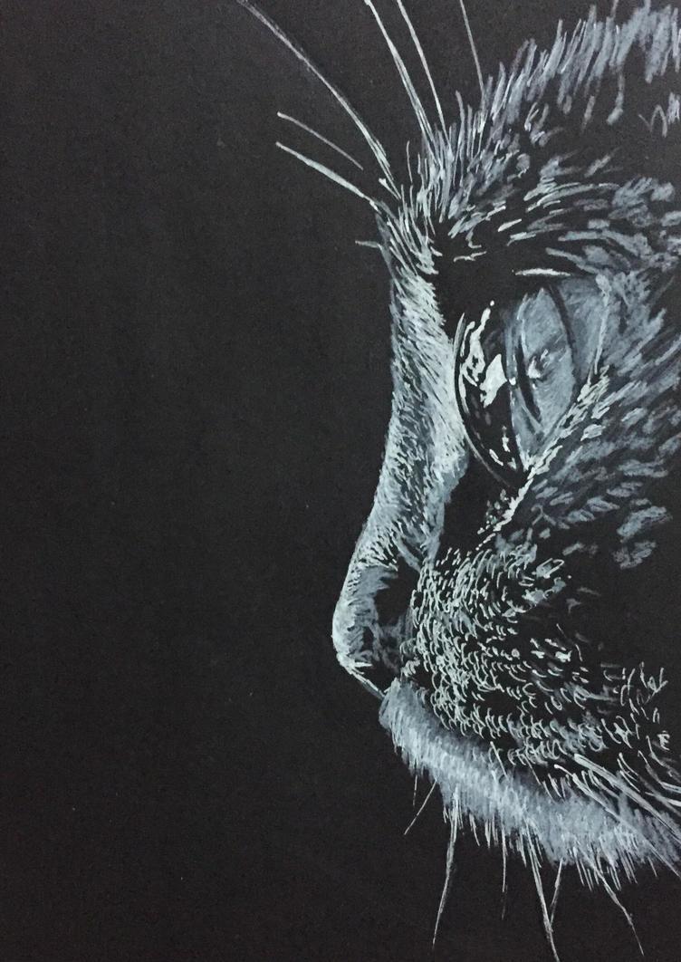Cat by MYwhiteCANVAS